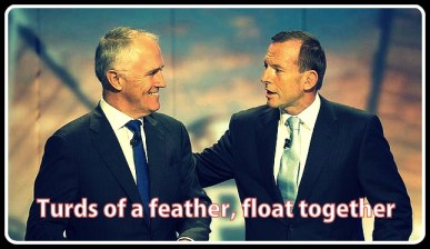 Turnbull-Abbott